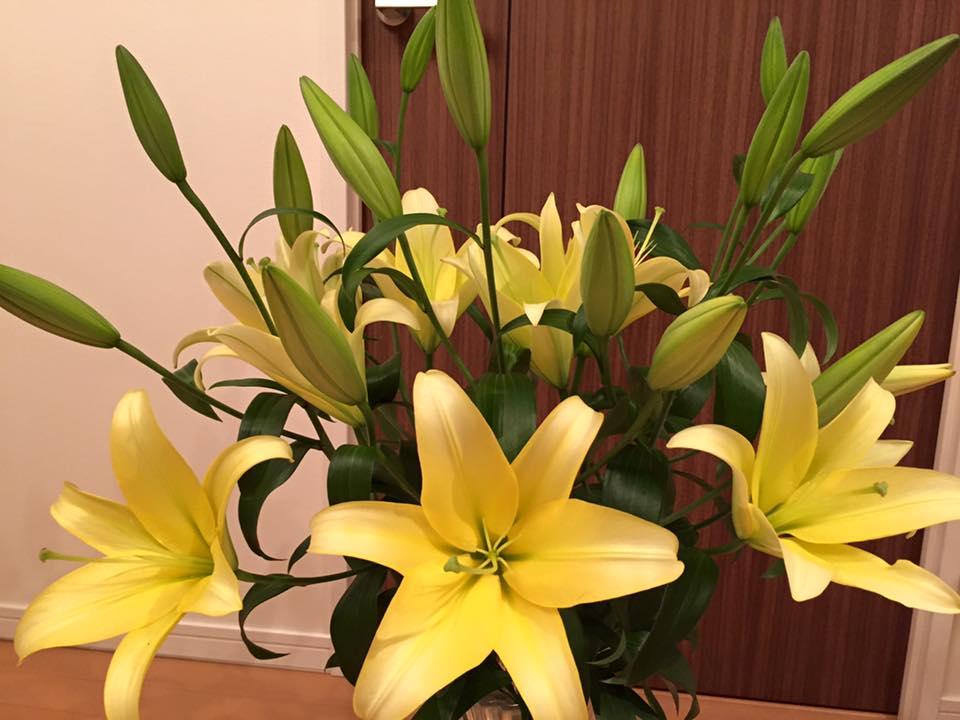 Tổng hợp hình ảnh hoa ly vàng đẹp nhất